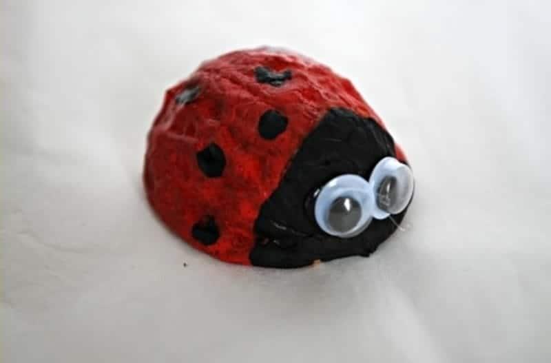Walnut ladybug