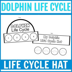 dolphin life cycle craft