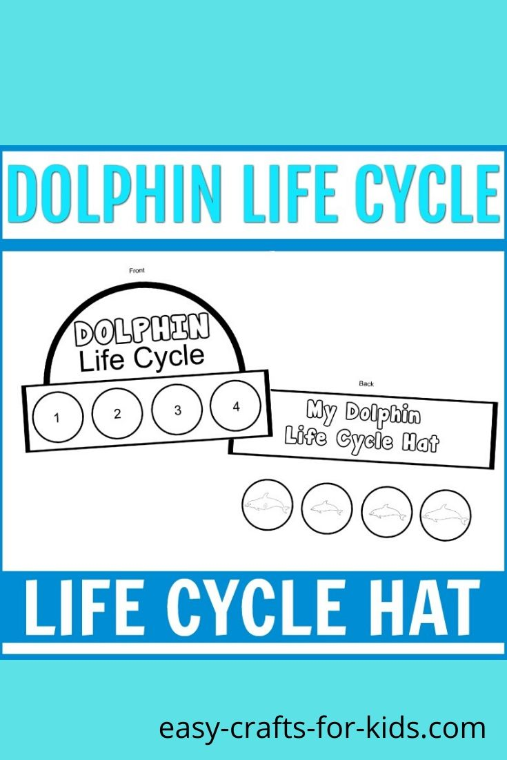life cycle of dolphin craft