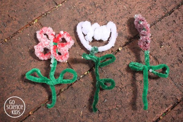Borax Crystal Flowers – Go Science Kids